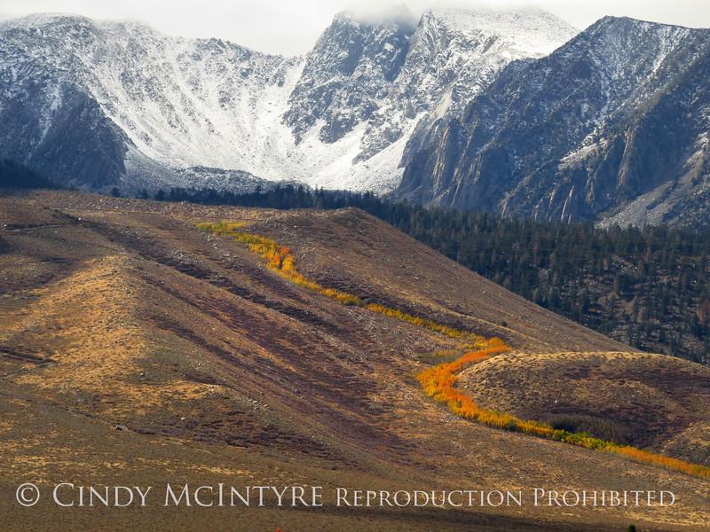 Aspen ribbon, Mammoth Lakes CA (1)