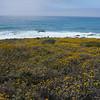 Cambria coast 3