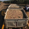 Nuts on wagon