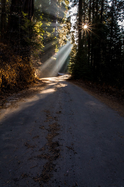 Sun Rays on road at Balch Park County Park