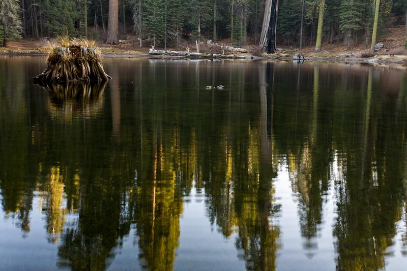 Stump in pond at Balch Park