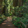 Sequoias - 9