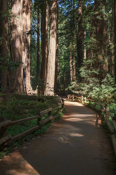 Sequoias - 5