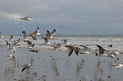 Gulls, Solimar Beach