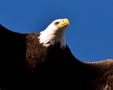 Lake Casitas wildlife