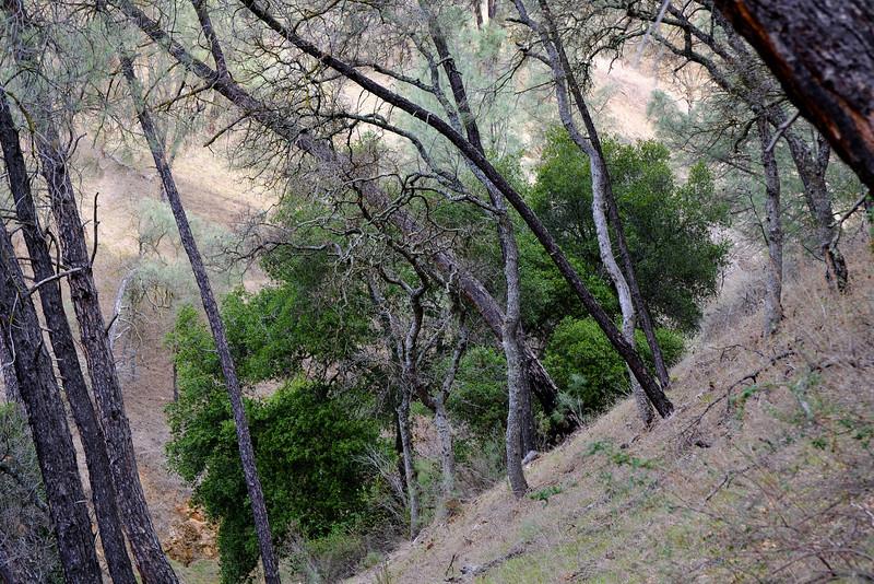 First ravine on Black Sage Trail.
