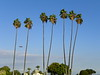 A series of photos following the Goodyear Blimp as it flies past the palms at Calvary Cemetery