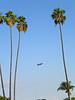 Blimp Palms - 4