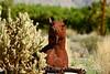 Borrego Springs CA sculptures by Ricardo Breceda (27)