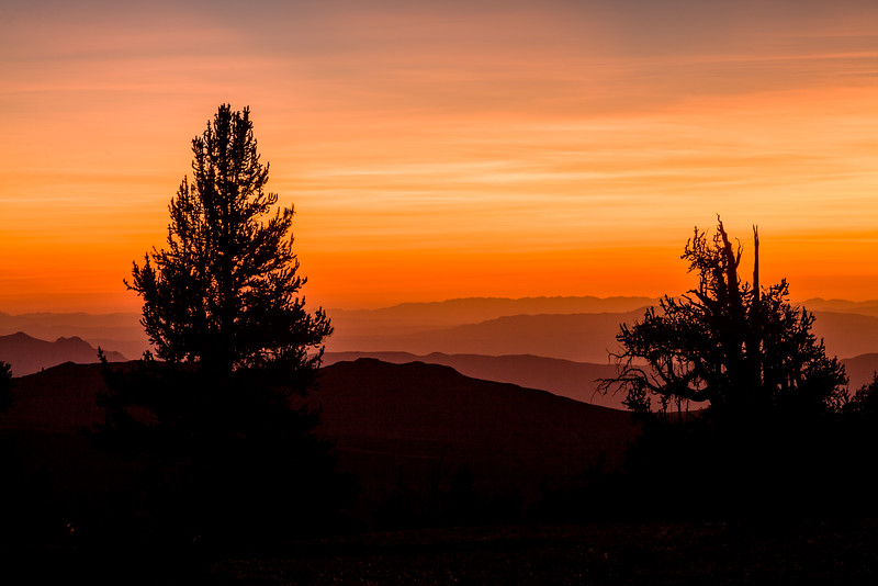 Sunrise and Bristlecone pine trees