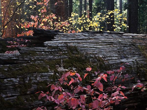 Fall-en Giant
