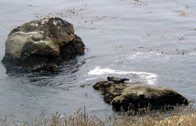 Point Lobos<br /> South Plateau Trail<br /> Robben