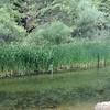 Chiquito Creek