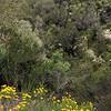 Del Puerto Canyon Road between Raines Park and Highway 130