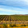 Lompoc California, Sta. Rita Hills Wine Region