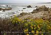 17 Mile Drive, Monterey CA (6)