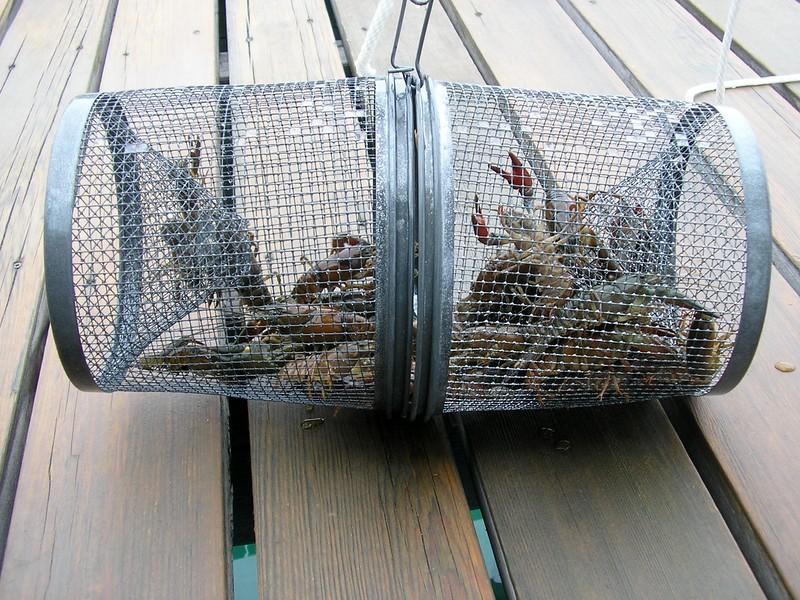 Crawfish Catch