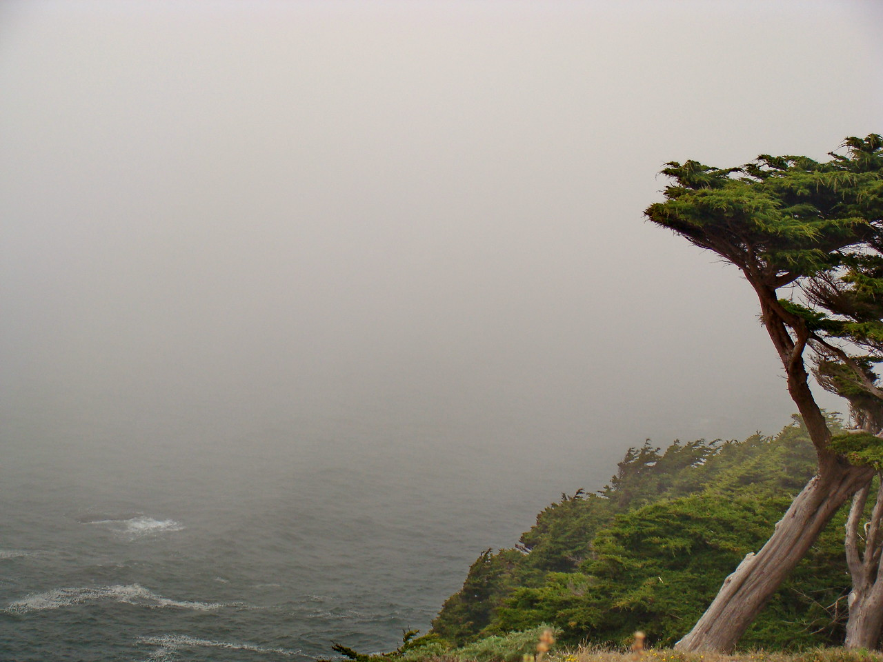 Windswept Tree on a Foggy Day