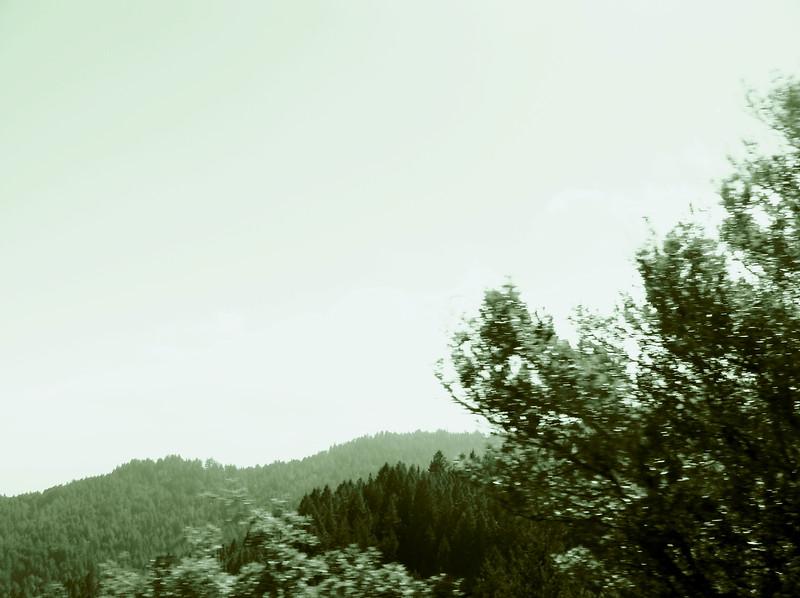 Mt. Tamalpais Vista