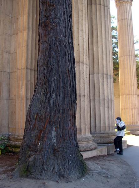 Pillars and Trees