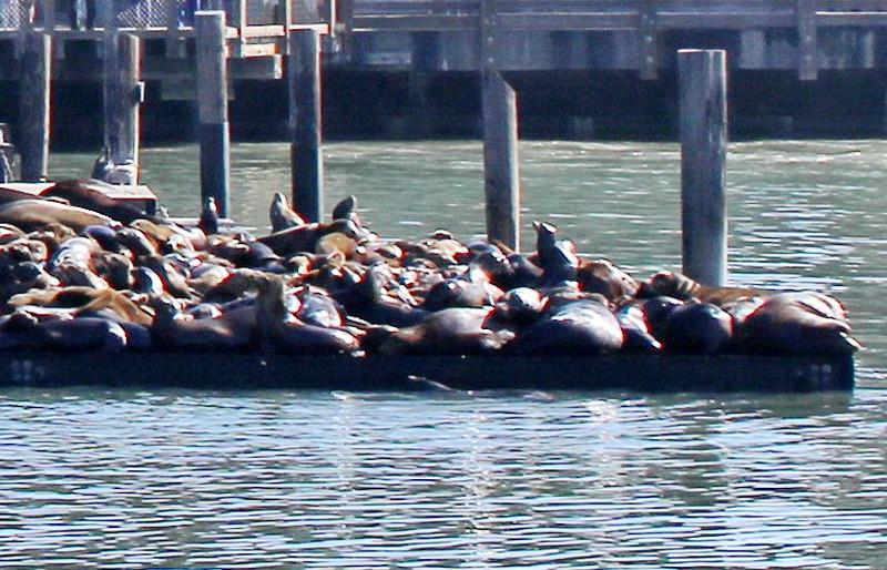 Sea Lions in the Sun