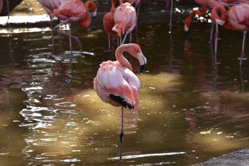 Charles Paddock Zoo, Atascadero CA