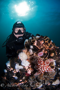 A diver examines a starfish amid brittle stars, urchins, and mussels on the Eureka oil platform.