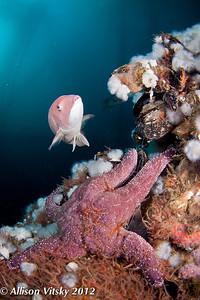 Marine life at the Eureka oil platform.