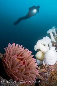 Monterey Bay reef scene