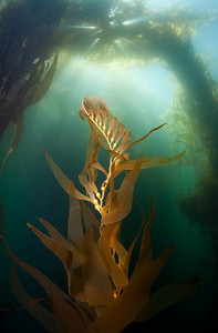 Kelp scenic