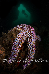Swim -through with diver and starfish