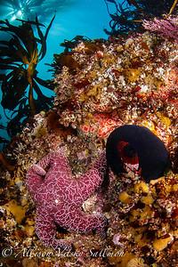 Carmel reef scene