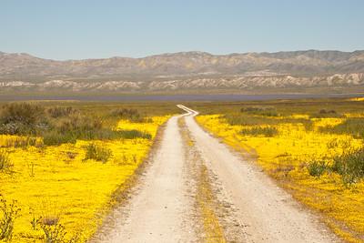 Springtime wildflowers, Carrizo Plain National Monument
