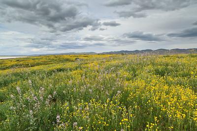 Carrizo Plain