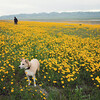 We found a field of flowers. Can you believe it?