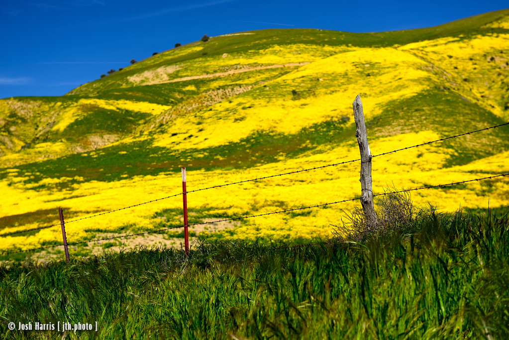 Highway 58, Carrizo Plain National Monument, April 2017.