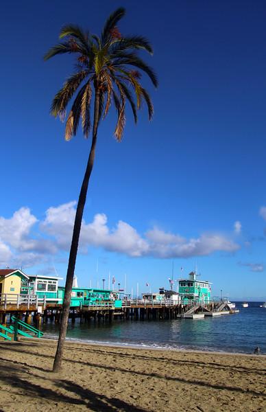 Catalina Island: , Avalon Pier with Palm, Portrait