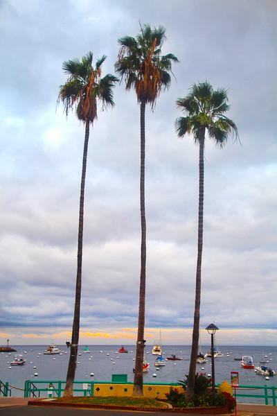 Catalina Island: Palms at Sunset, Avalon Harbor