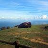 Catalina Island:  Bison at Rest
