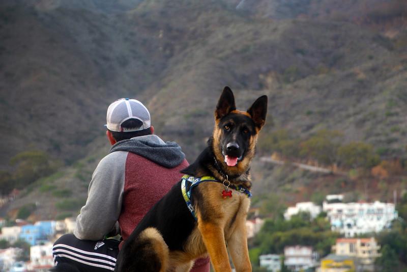 Catalina Island:  German Shepherd on Trail
