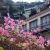 Catalina Island:  Bougainvilla, Pavilion Hotel