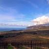 Catalina Island: Portrait View of Rusack Vineyards