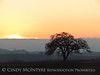 Oak tree at sunset, Paso Robles, CA (8)