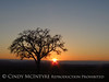 Oak tree at sunset, Paso Robles, CA (4)