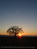 Oak tree at sunset, Paso Robles, CA (5)