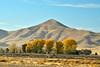 Carrizo Plain Natl Mon, CA (10)