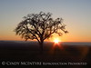 Oak tree at sunset, Paso Robles, CA (1)