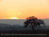 Oak tree at sunset, Paso Robles, CA (6)