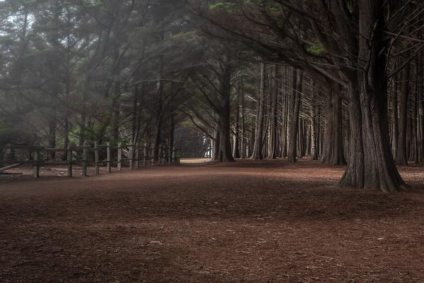 Forrest Corridor