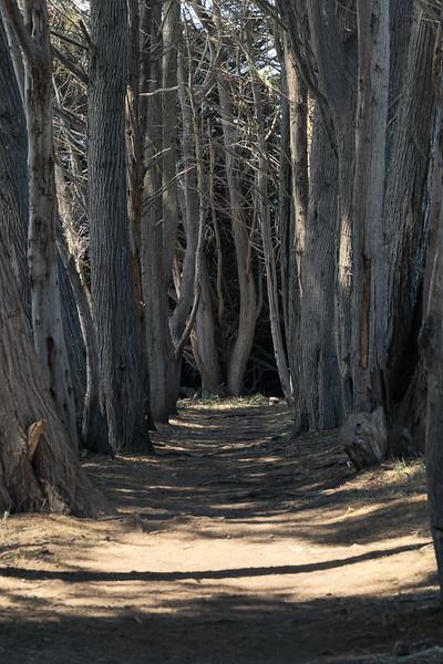 Dead Tree Alley